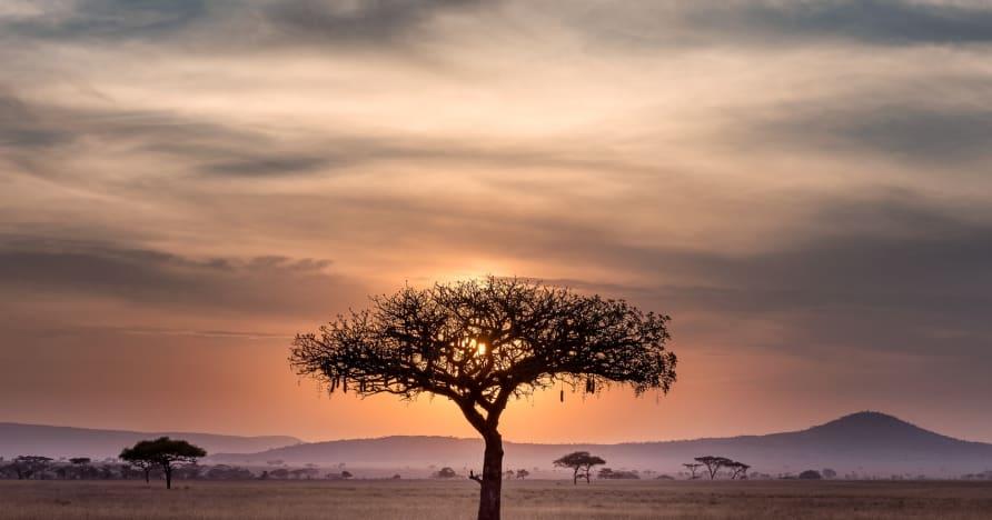 Situasi Saat Ini dari Perjudian Online di Afrika