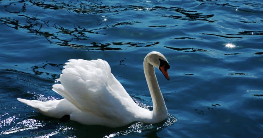 Royal Swan dari Ainsworth Gaming: Ulasan Lengkap
